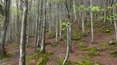Landscape in mountain beech forest at spring, panorama 4k