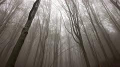 Landscape in a spring forest misty morning, tilt view 4k