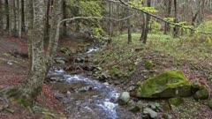 Stream in beech forest in mountains at spring, 4k