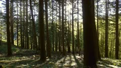 Rays of the sun in the spring forest, panorama 4k