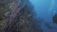 Scuba Diver ascends prolific Mediterranean Reef Wall