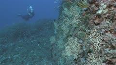 Scuba diver at Mediterranean Reef wall