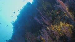 Beautiful Mediterranean Reef wall