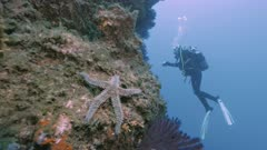Starfish and Scubadiver at Mediterranean Reef wall