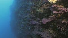 Moving along beautiful Mediterranean Reef Wall, POV