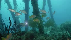 Schooling tropical fishes under Bonaire´s Salt Pier, underwater shot