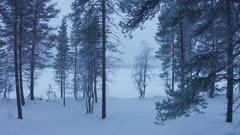 Moving through the snow white forest of Lapland, Finland - wide rolling