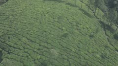 Tea plantation scenery in the mountains of Munnar, India. Aerial drone view