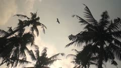 The Above View Of A Palm Trees During Sunset in India - Wide Shot