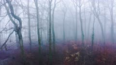 Aerial drone video of trees in thick fog weather conditions, mysterious woodlands forest in mist and fog, beautiful nature landscape scenery in England, UK