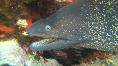 Fish - Poisson