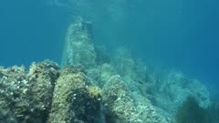 Mediterranean reef