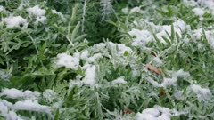 Snow Beach vegetation