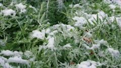 Snow Beach vegetation