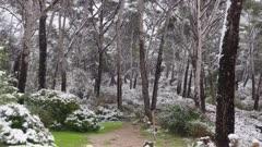 Cap Sicié - Snow -  Mediterranean