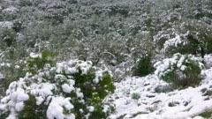 French Mediterranean Snow