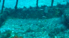 Récif artificiel Sous-marin - underwater artificial reef