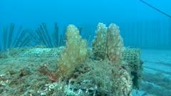 Récif artificiel Sous-marin - underwater artificial reef