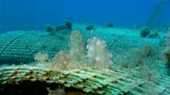 Artificial reef - Récif artificiel