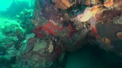 Eradication lionfish - Eradiction Rascasse Volante