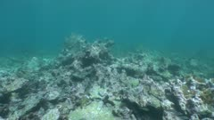 Dead coral - Corail mort