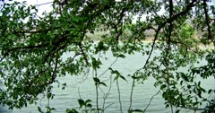 Greenish lake water, view from the berry tree on lakeshore