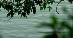 Greenish water in lake