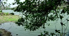 Greenish lake water and lakeshore, view from the berry tree on lakeshore