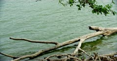 Greenish water and fallen tree trunk on the lakeshore