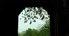 Banyan tree leaves behind the Ranthambore forest entrance arc