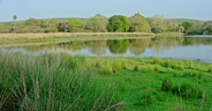 General view of Beautiful Ranthambore lake area covered with greenish grassland.