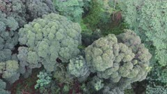 Aerial Footage Hawaii Tropical Forest and Mountains