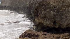Caribbean Martin nesting in rocks