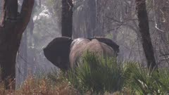 Elephant grazing in a dense forest