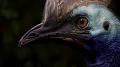 Birds Video Décor Reel