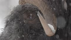 Mammals Video Décor Reel