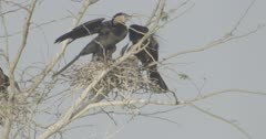 African darter family in nest