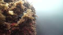Moray Eel hiding among rocks