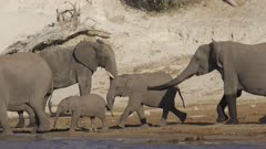 Elephant chasing others ones