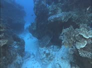 Travel Over Healthy Coral Reef With Abundant Hard Corals