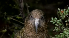 Kea close-up exits
