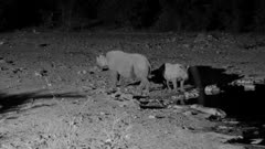 Black rhinoceros cow and calf leaving waterhole at night