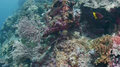 Sponge On Coral Wall 5K Indonesia