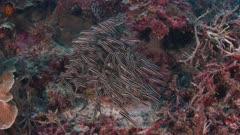 Schooling Catfish Swimming 5K Indonesia