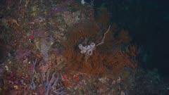 Sponge Growing On Reef Wall 5K Indonesia