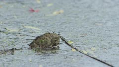 Water Dragon Submerged, Head Shot 5K