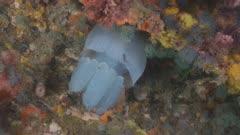 Jellyfish Underneath Colourful Jetty Pylons 5K