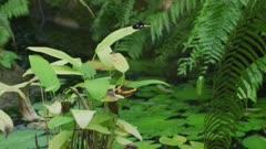 Australian Lurcher Butterfly Sitting on a leaf 4K - wide shot.