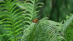 Monarch Butterfly Sitting On A Leaf 5k