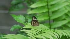 Orange Lacewing Butterfly Sitting On a Leaf 5k